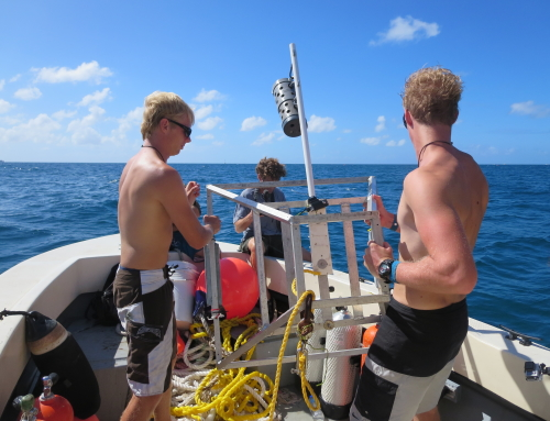 Shark Surveys with the St. Maarten Nature Foundation