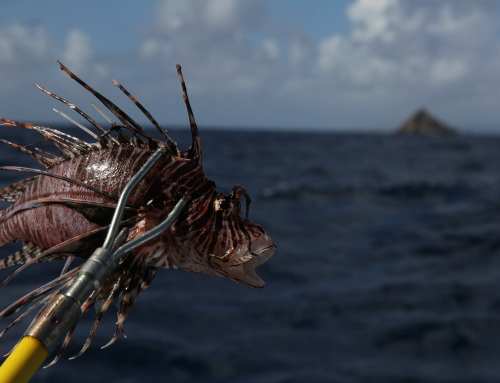 Lionfish Mitigation with the St. Barts Nature Reserve