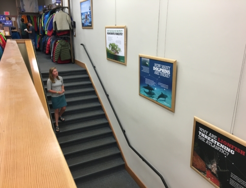 Hello Ocean Display at Patagonia Store