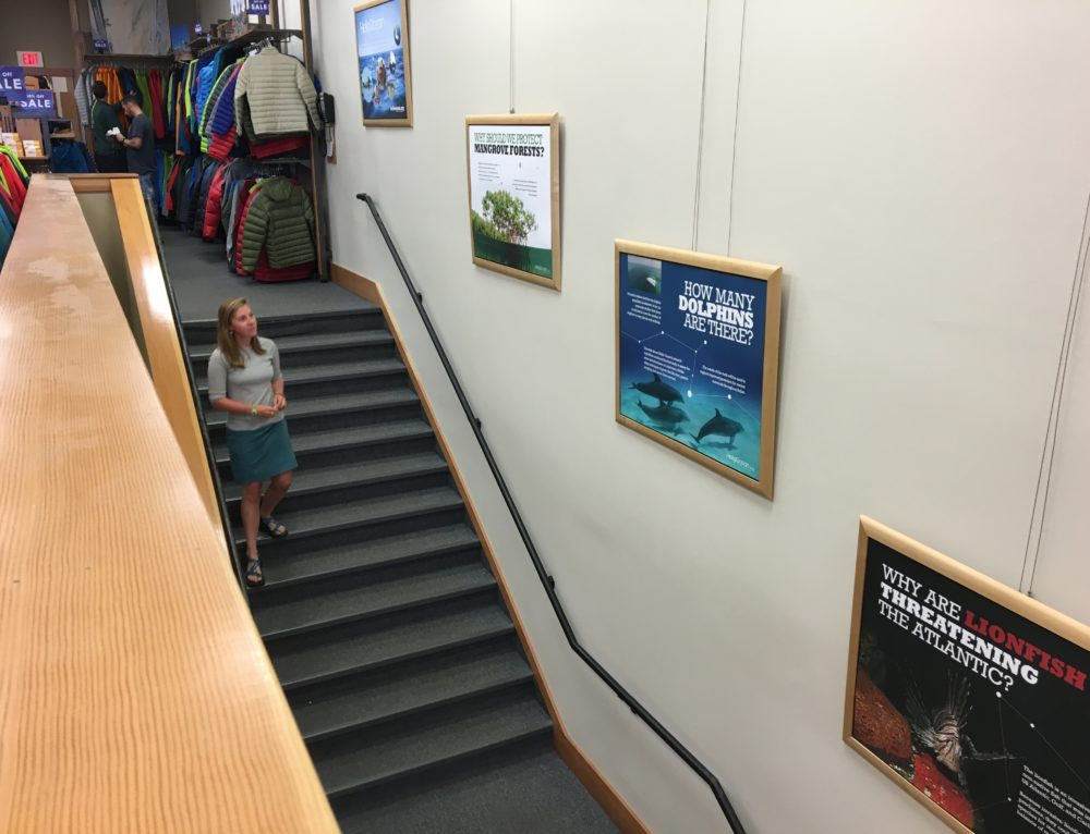 Hello Ocean Display at Patagonia Store